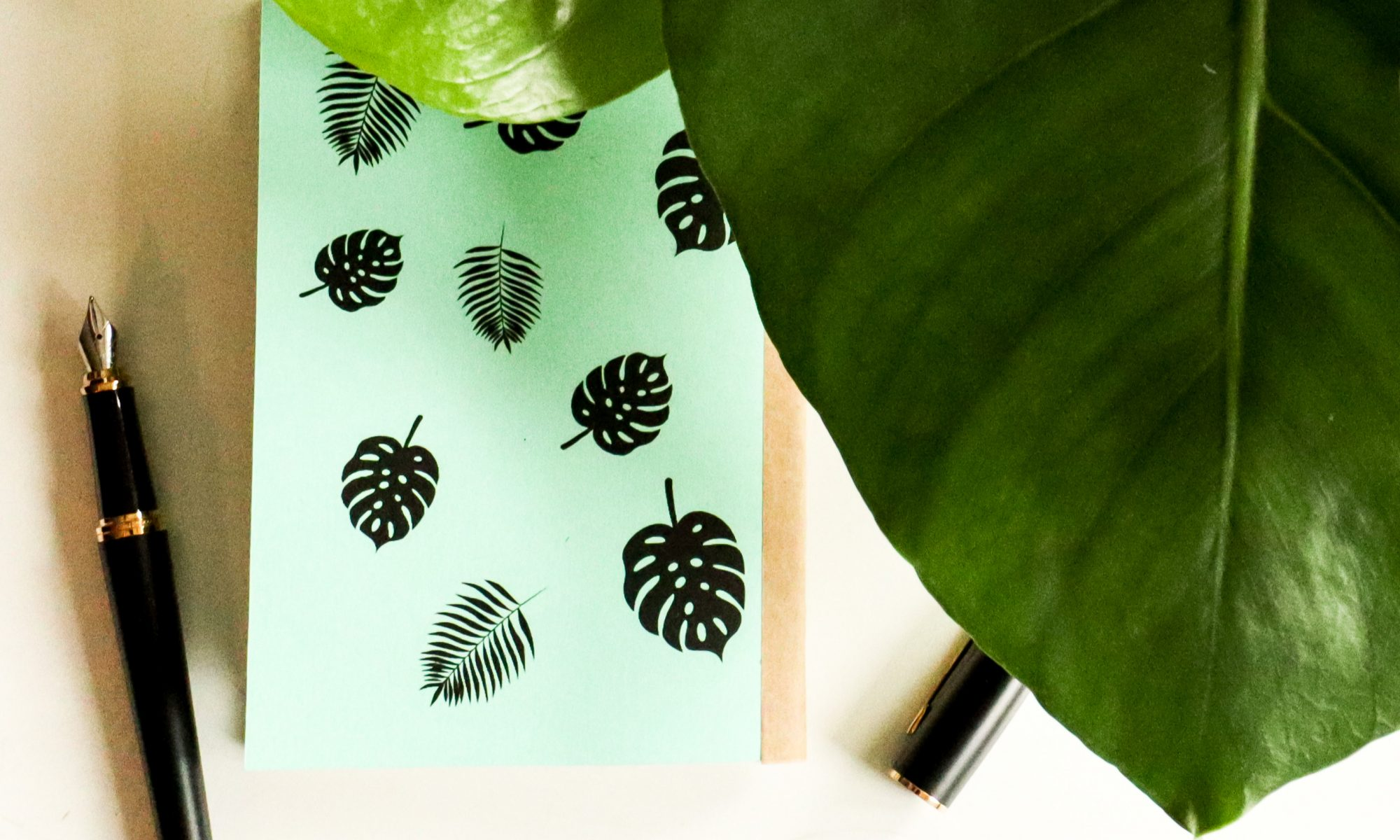 Monstera – Mint
